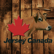 Jersey Cand.